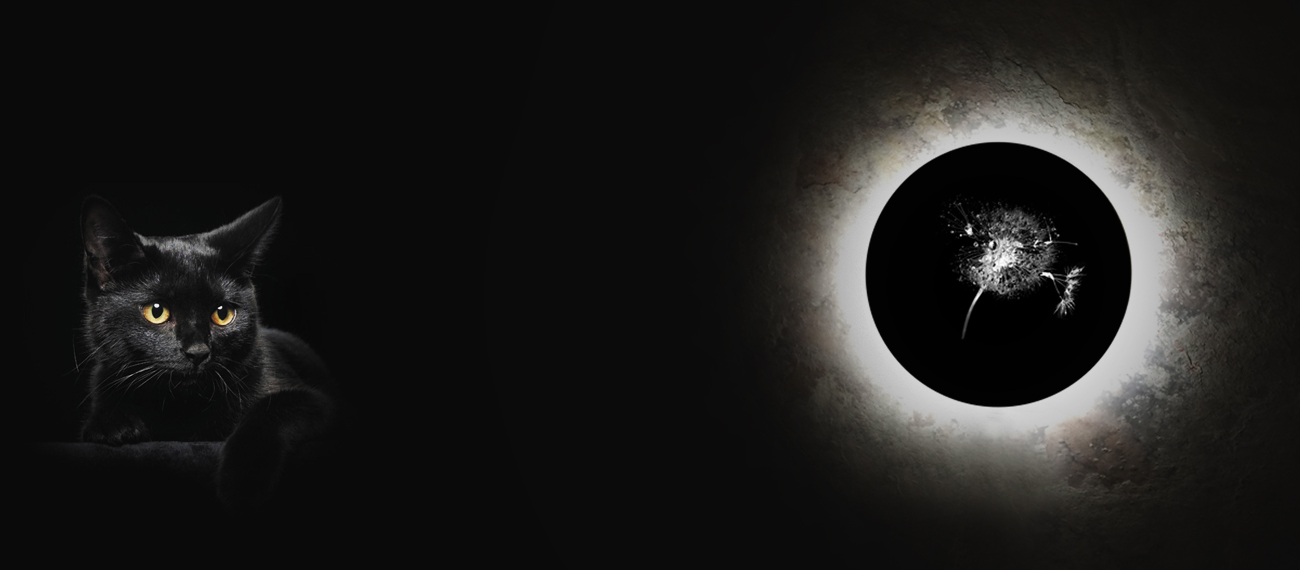 Коллекция Eclipse